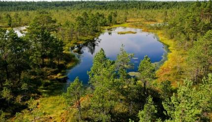 Lahemaa National Park - The Viru Bog