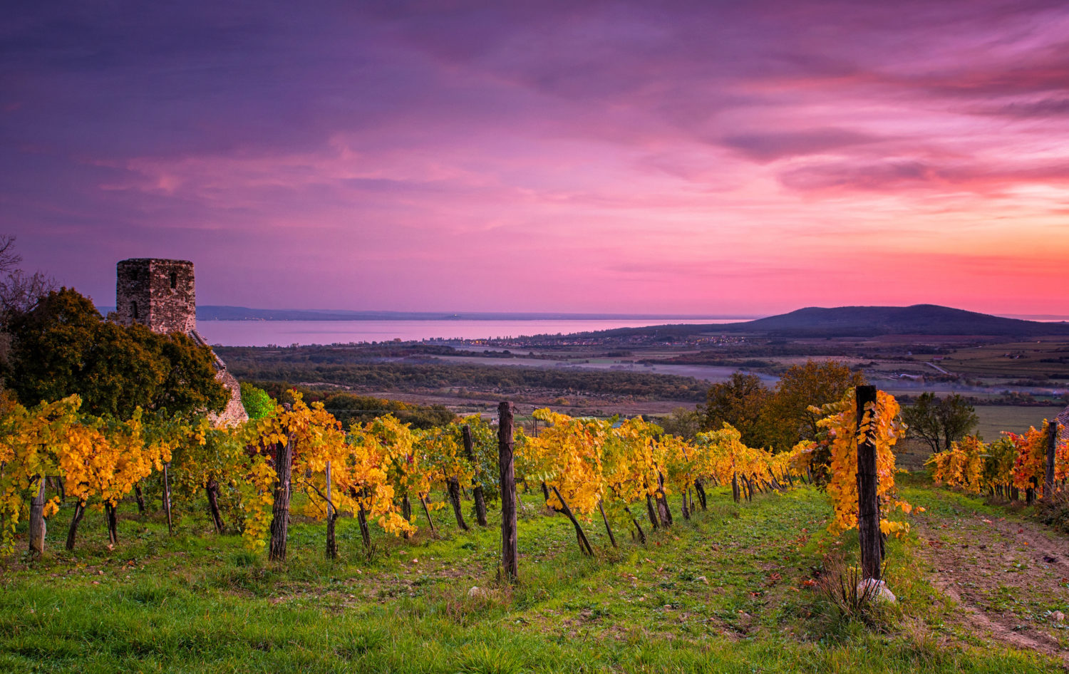 sunset over vineyards at lake Balaton, Hungary