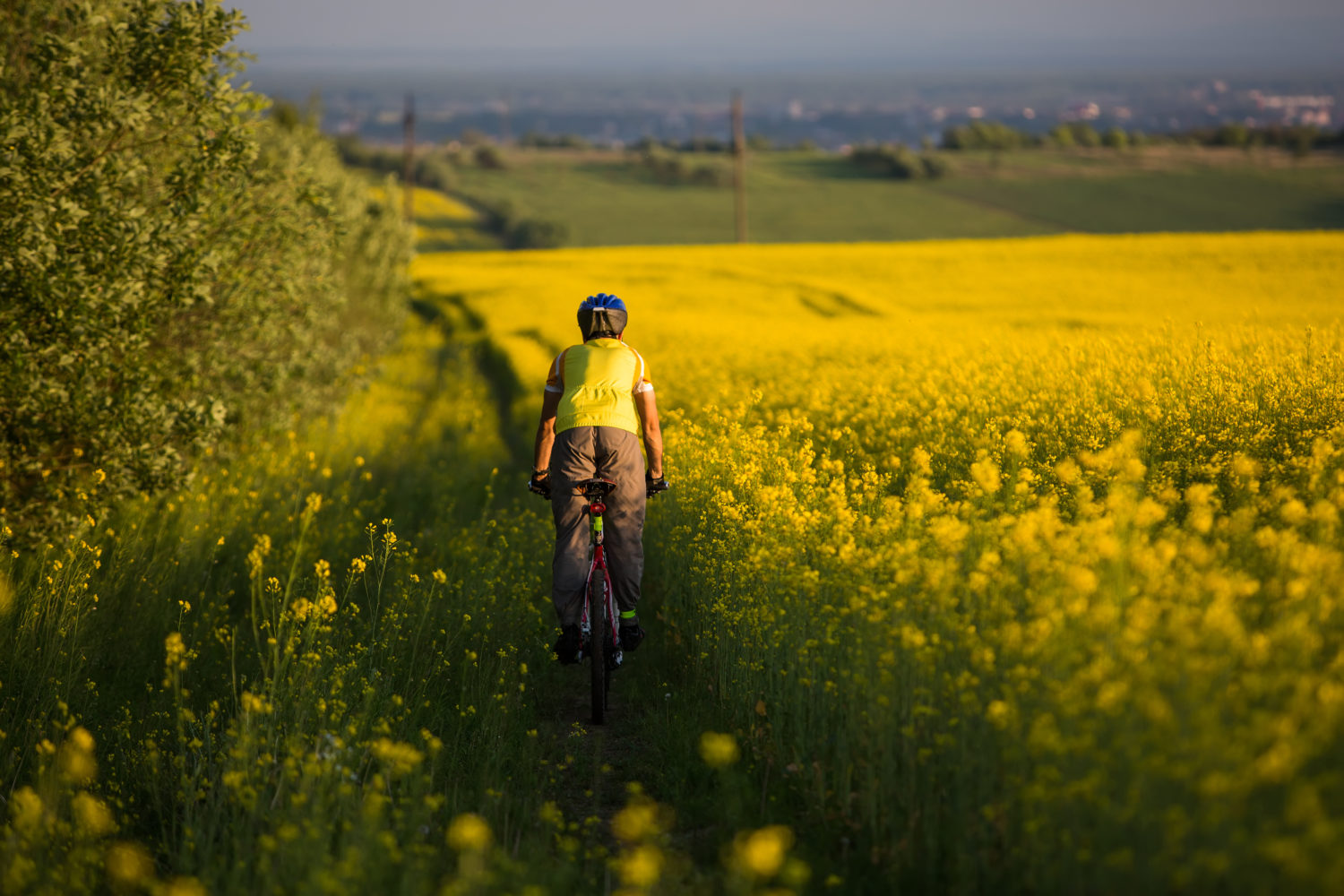 Cyclist on a country road next to a canola field going from Riga to Vilnius